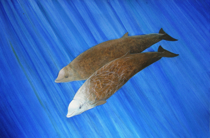 Cuvier's Beaked Whale, whale, ocean