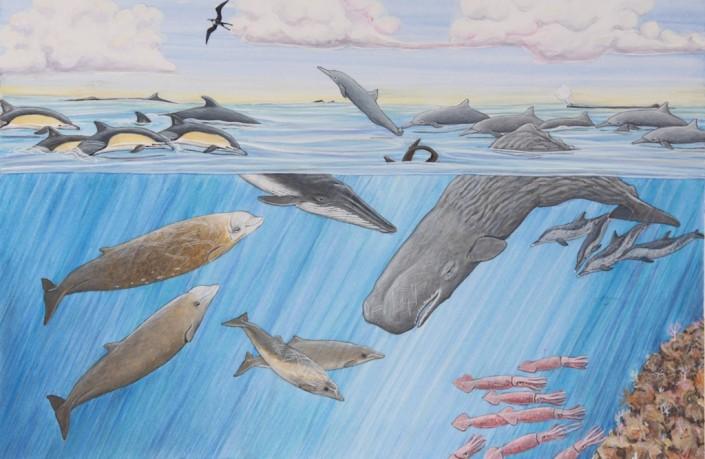 Whale, sperm whale, beaked whale