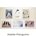 Adelie Penguins1