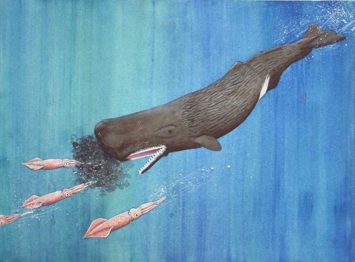 Sperm Whale, Squid, Whale, Ocean