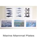 Marine Mammal plates2