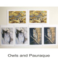 Owls and Pauraque2