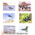 Pacific Seabirds1