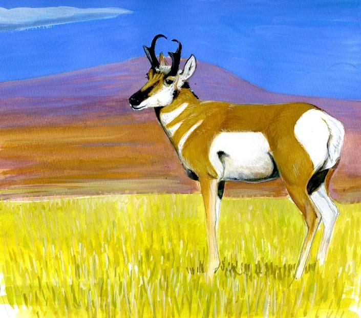 Pronghorn, mammals