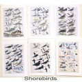 Shorebirds2