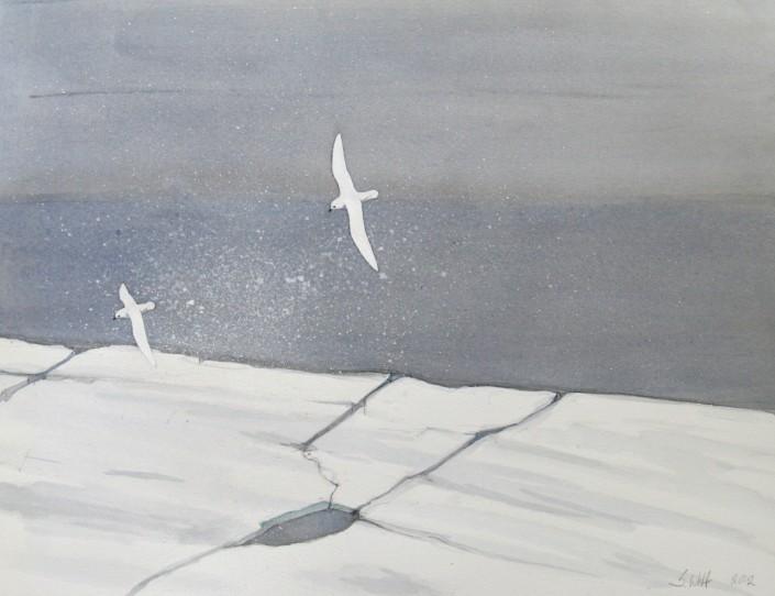 Snow Petrel, seabird, Antarctica