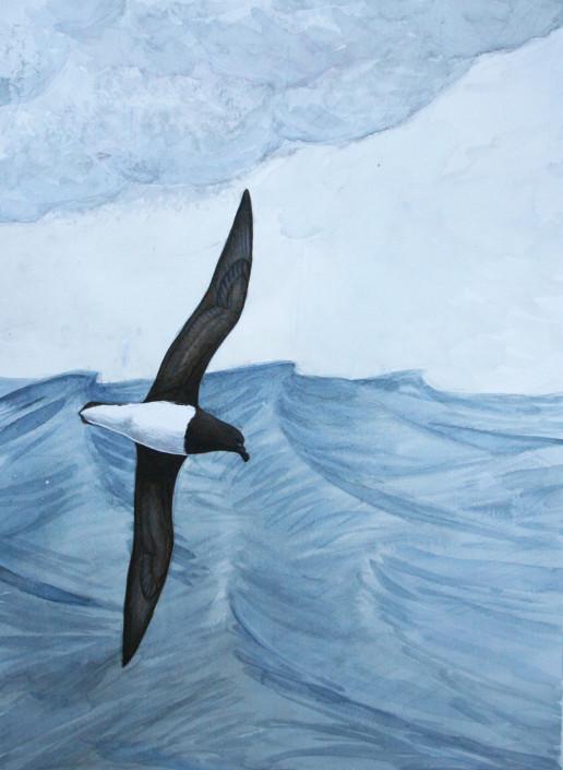 Tahiti Petrel, seabirds, ocean