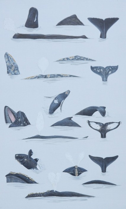 Whale, humpback whale, sperm whale,gray whale, North Pacific right whale