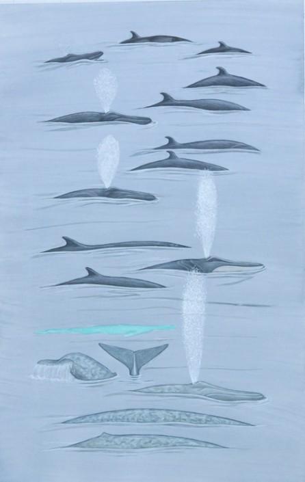 Whale, blue whale