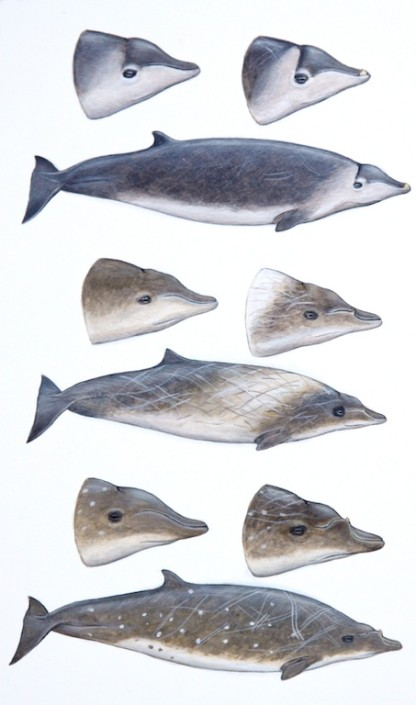 Whale, beaked whale