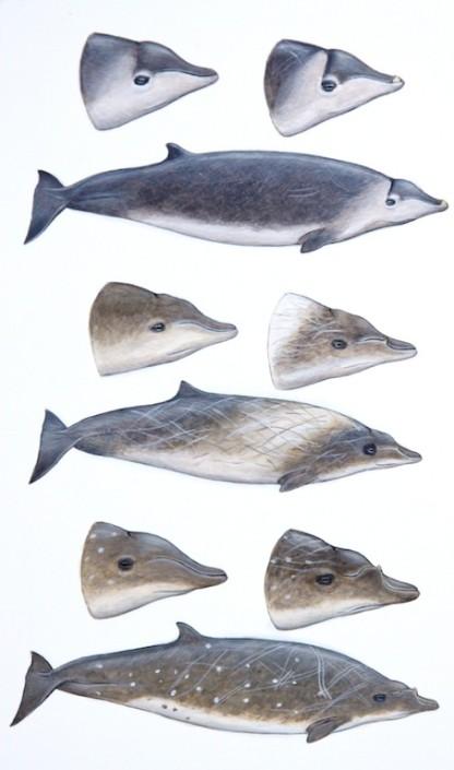 Whale, beaked whale