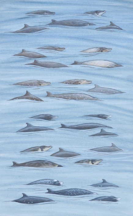 Whales, beaked whale