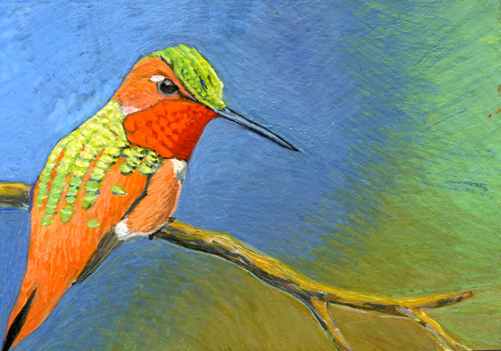 Hummingbird, rufous hummingbird