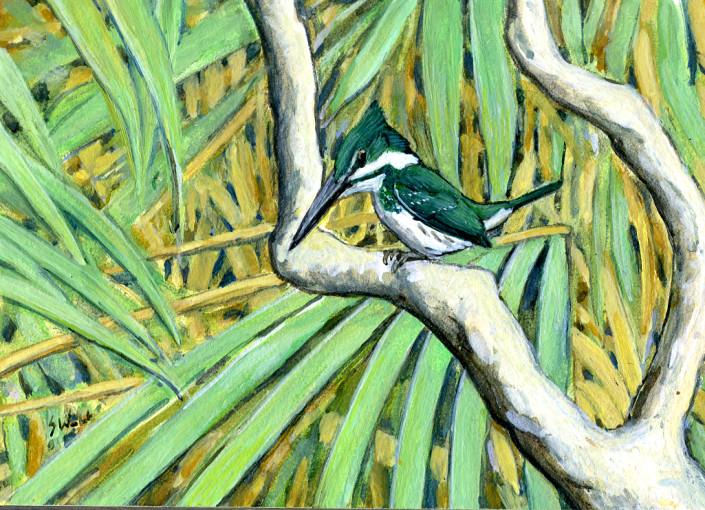 Kingfisher, Amazon Kingfisher