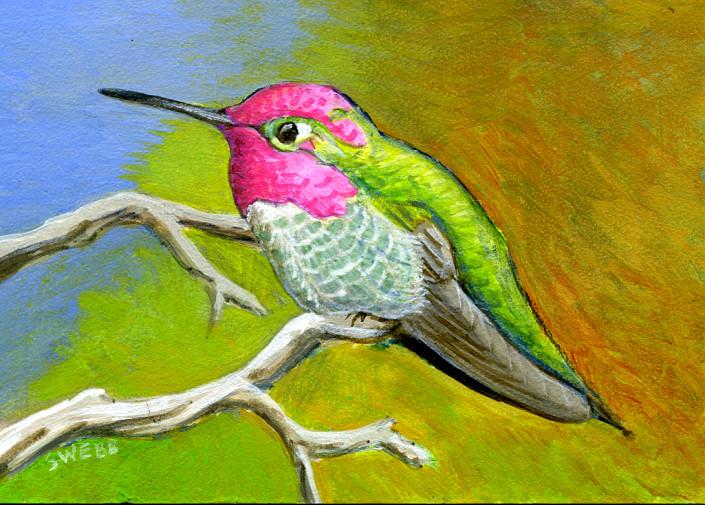 Hummingbird, Anna's Hummingbird