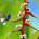 Hummingbird, ecuador, heliconia, tropics