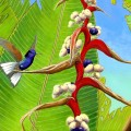 Coronet and heliconia