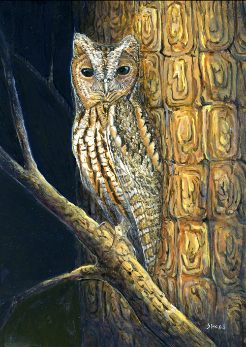Flammulated Owl, Owl