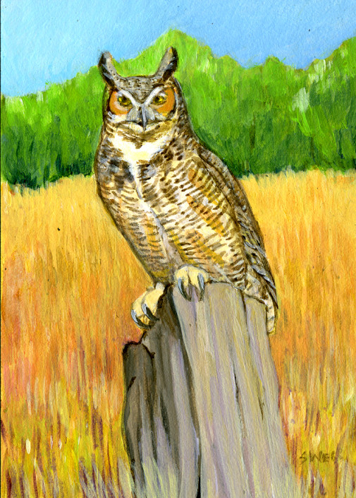 Great Horned Owl, Owl