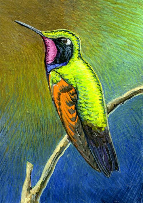 Garnet-throated hummingbird, hummingbird,