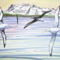 Albatross, Alaska, Aleutians,