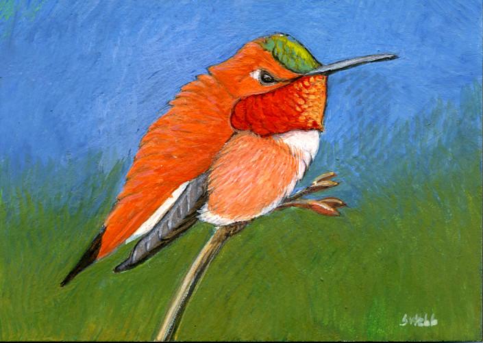 Rufous hummingbird, hummingbird