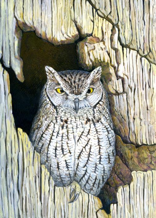 Owl, Screech Owl,