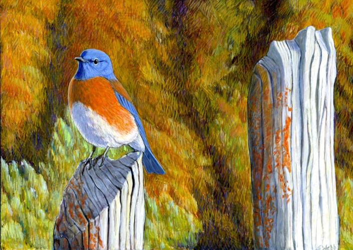 Bluebird, egg tempera, Western bluebird