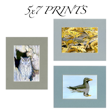 5x7 prints matted to 8x10