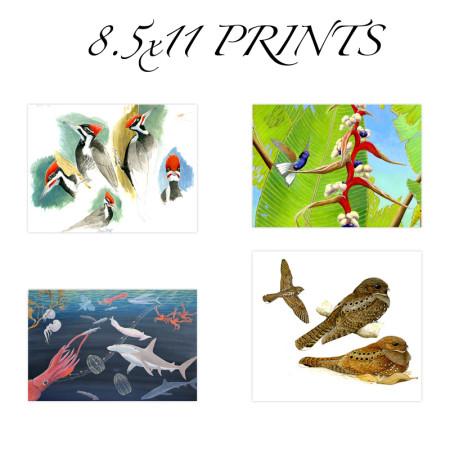 8.5 x 11 prints